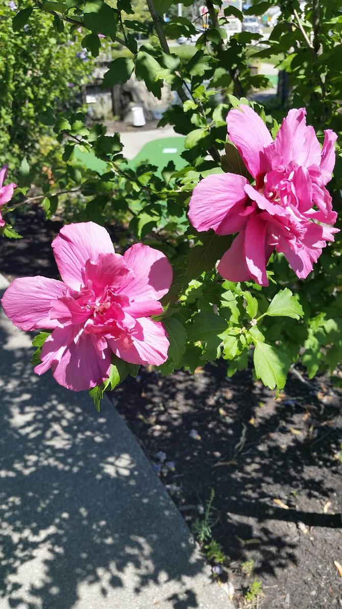 Pink Flower by StabbedxWitxPleasure