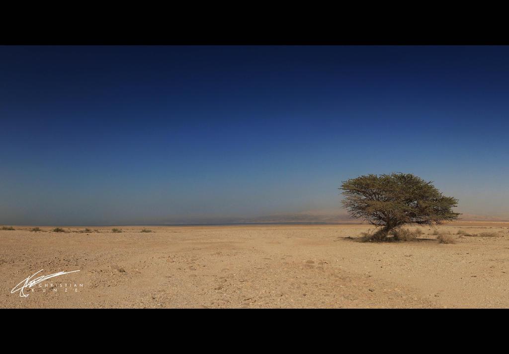 Dead Sea Tree by KunzePhotography
