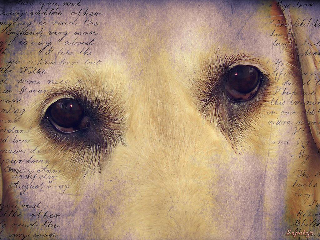 Golden eyes by Setrahyn