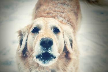 Just bark by Setrahyn