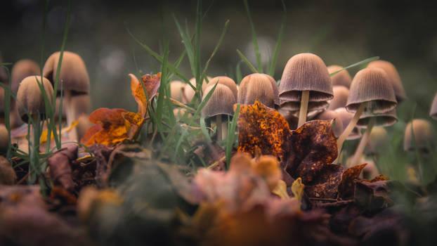 Mushrooms VIII