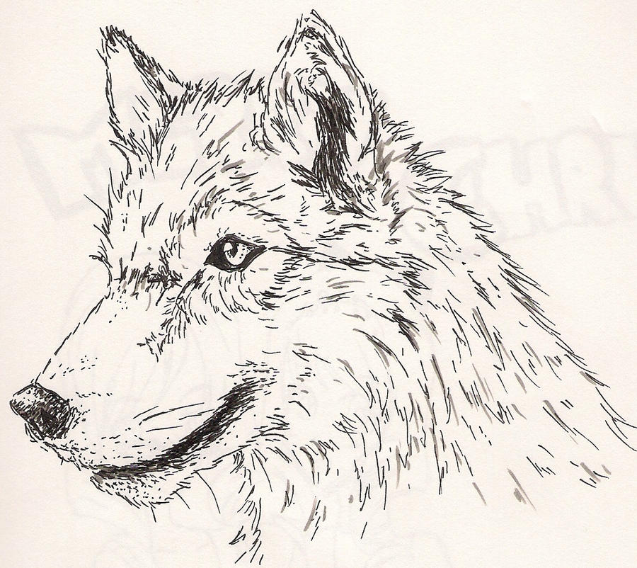 Wolf side view drawing - photo#29