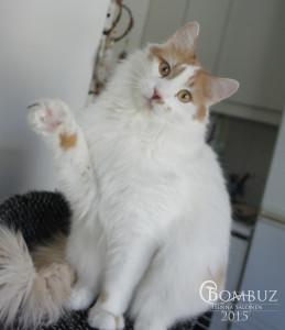 Bombuska's Profile Picture