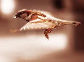 bird3 by pilleriin