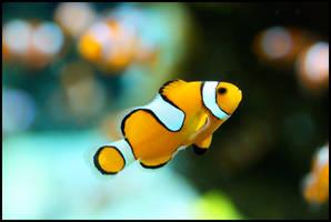 I Found Nemo by qtrz-delirium