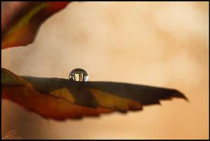 Drop.On.Leaf by qtrz-delirium