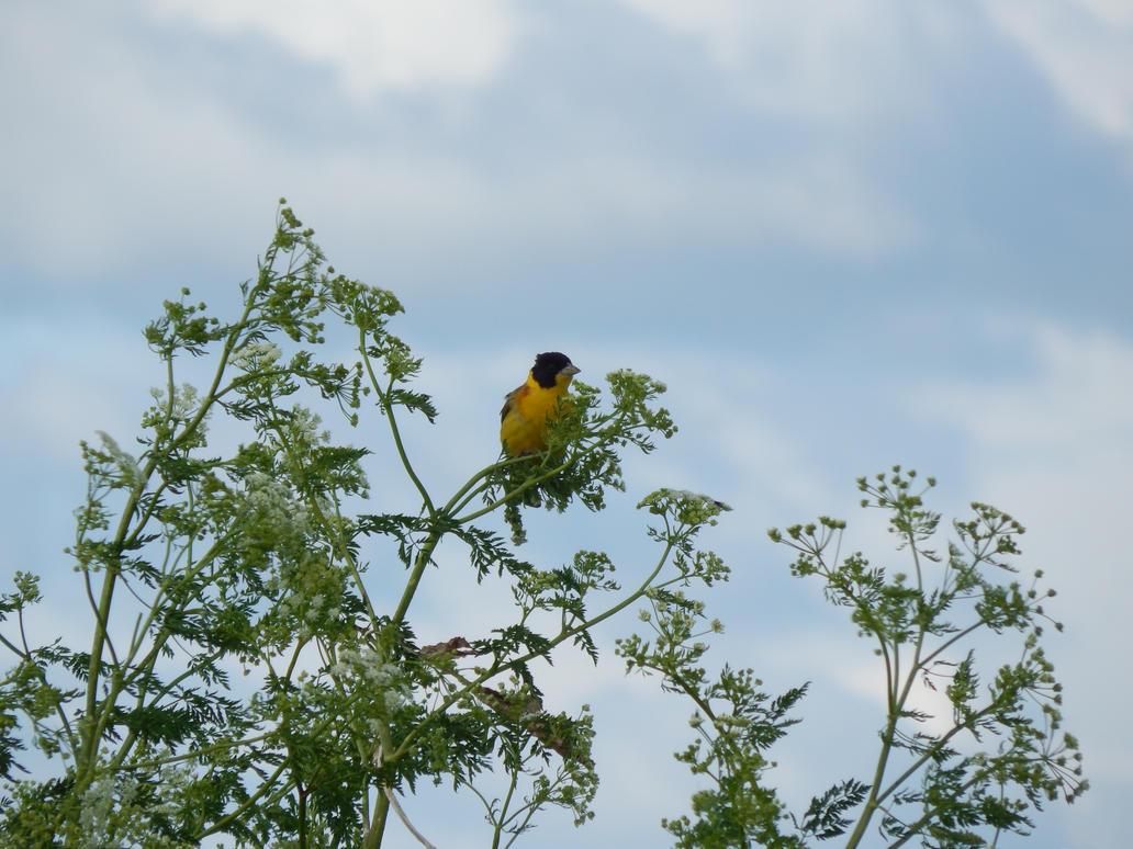 Yellow bird by heavenscall