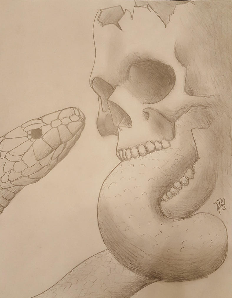 Skull study by Subtorch