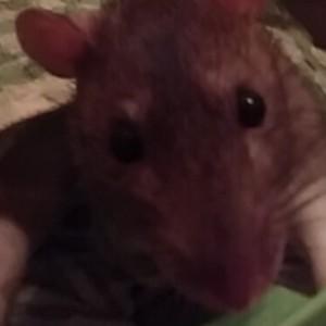 AmberBirbs's Profile Picture