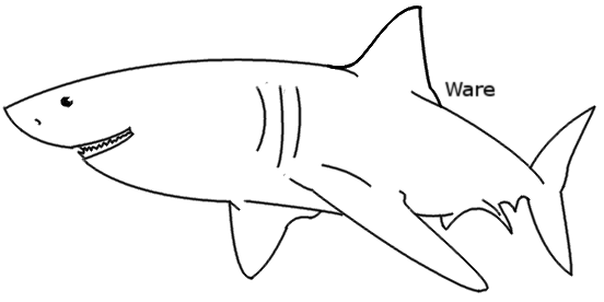 Line Art Shark : Shark lineart by limskart on deviantart