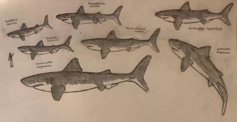 Prehistoric shark size comparison  by kumarkiranb356