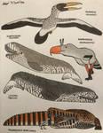A small collection of Neogene Predators