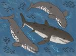 Bullying the Monster Shark