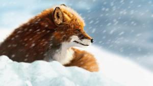 Tempest Snow Fox