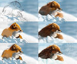 Fox painting steps