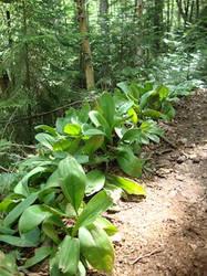 Plant Vegetation