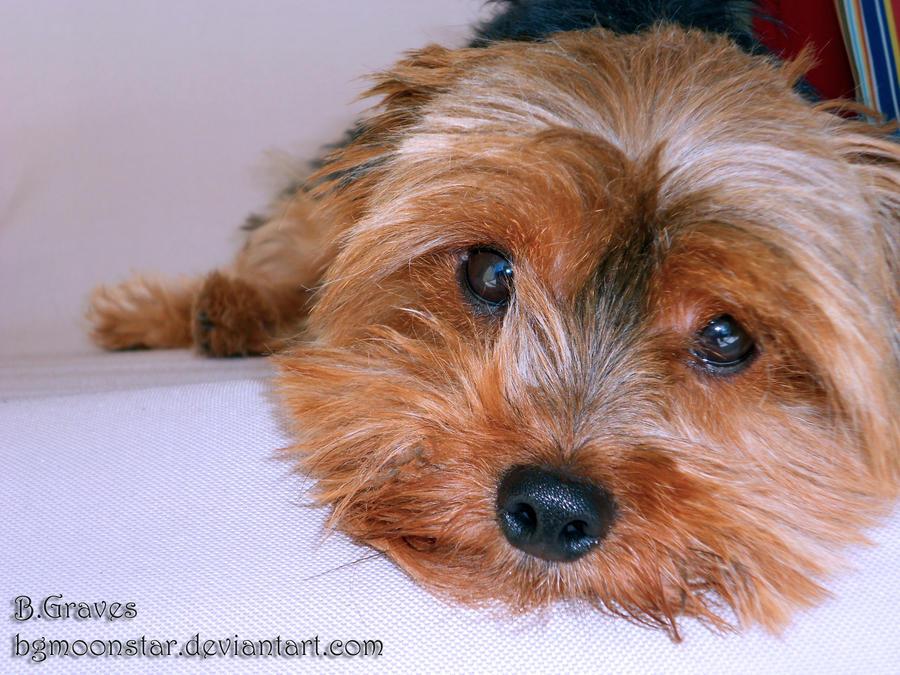 Image Result For Bright Hope Dog