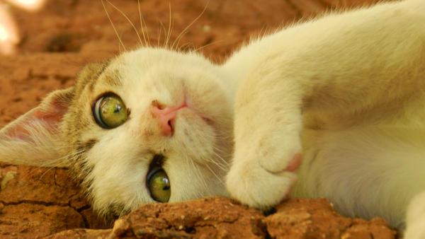 cat effect by MujahidAlomary