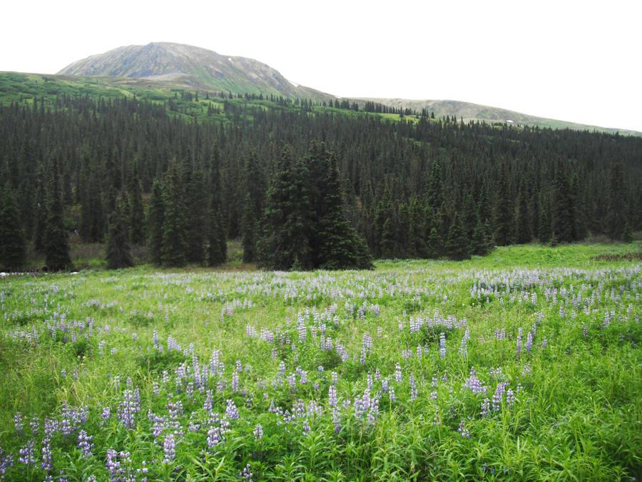 Blue Flowers Meadow 9