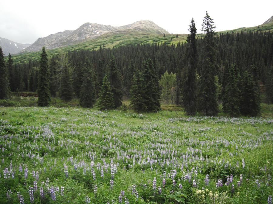 Blue Flowers Meadow 10
