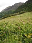 Crow's Pass Mountain Field 6