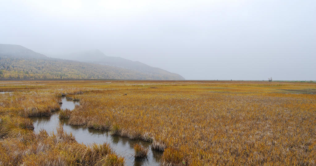 Marsh 8