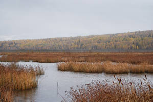 Marsh 5 by prints-of-stock