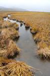Marsh Panorama 1