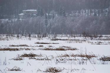 Winter Lake 8
