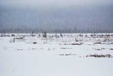 Winter Lake 10