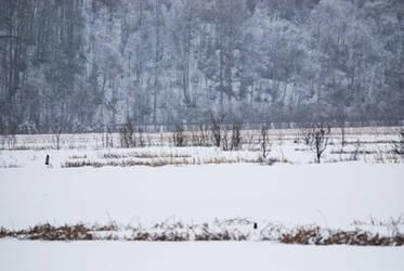 Winter Lake 12