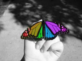 Color Splash Butterfly