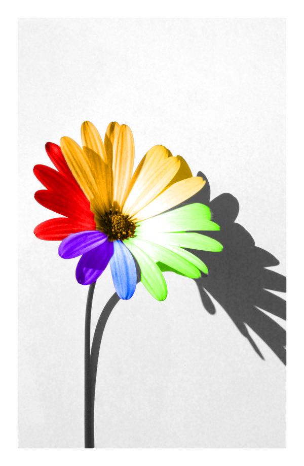 Rainbow Flower Color Splash By