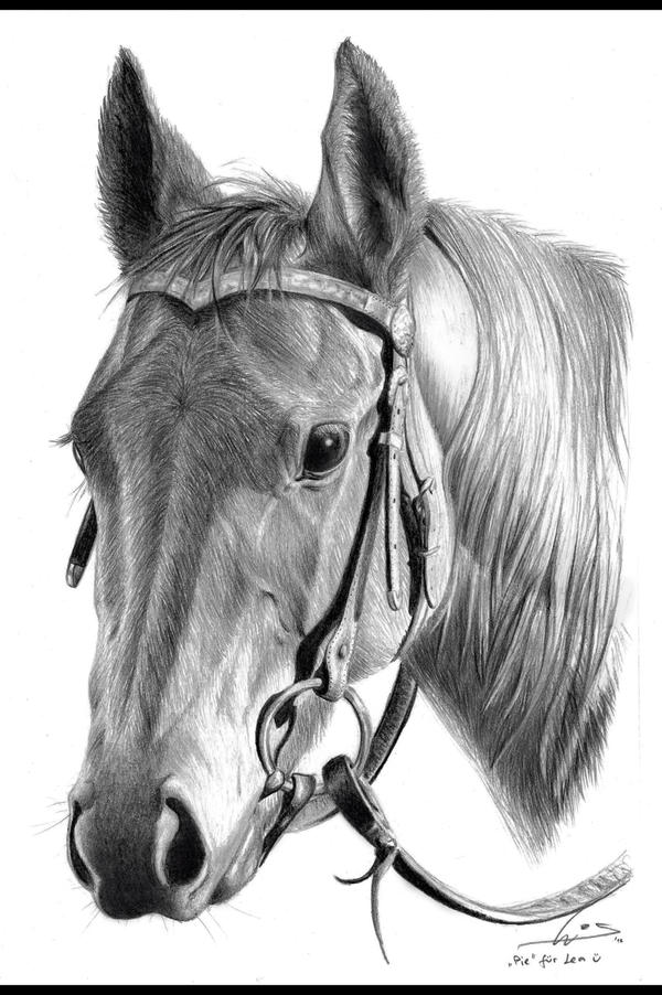 Drawing horses on Pinterest | Quarter Horses, Horse Art ...