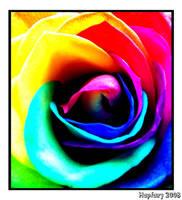 Rainbow Rose Heart by crystalfalls