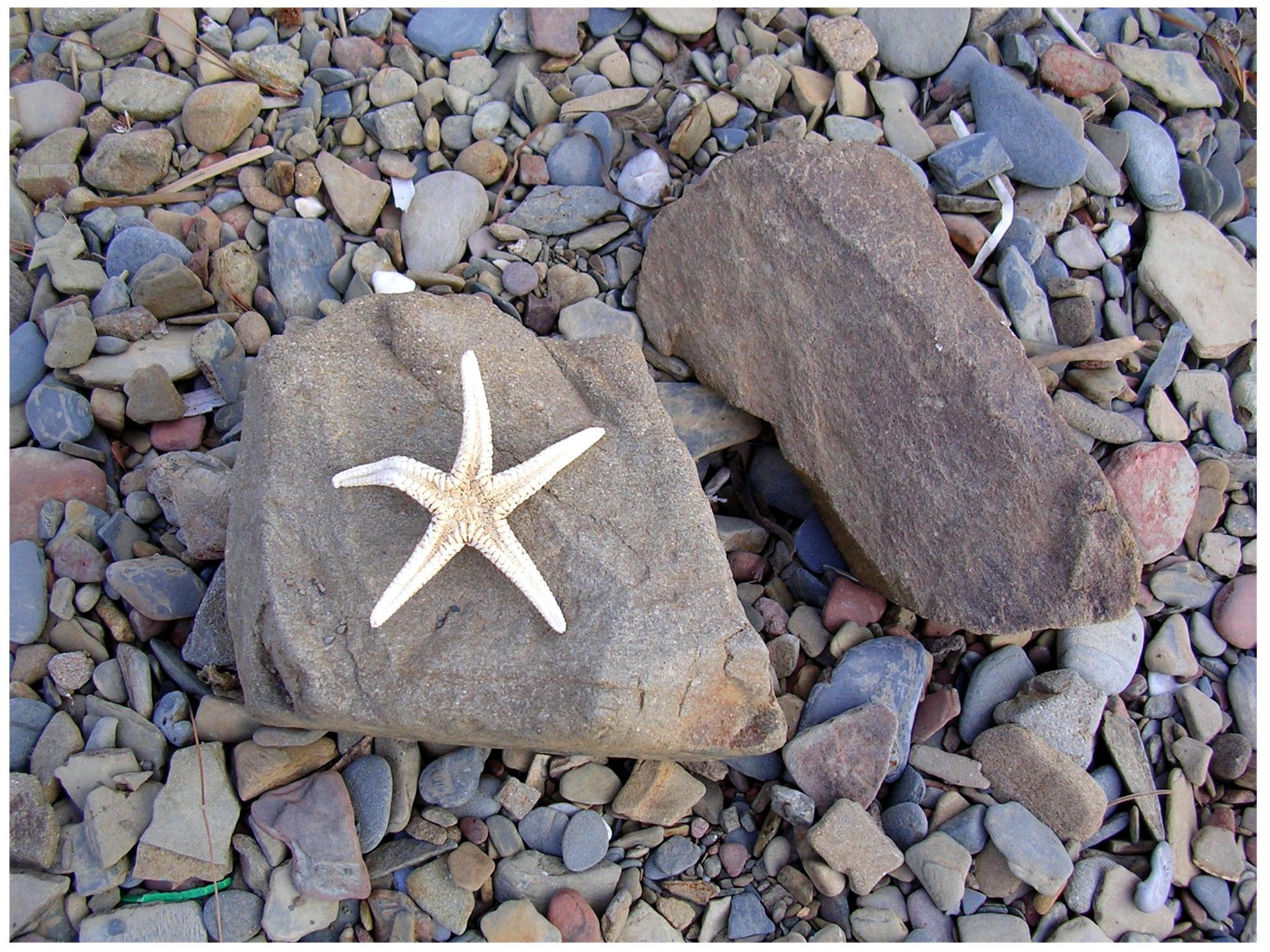 Starfish by crystalfalls