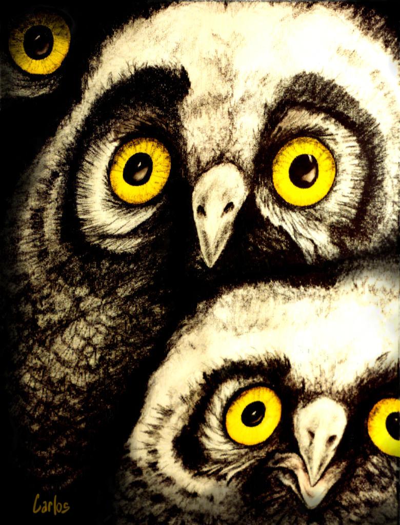 Owls by TomCarlos