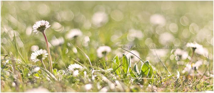 Spreading Spring