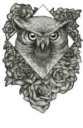 Owl by calebex