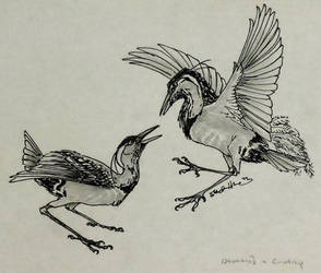 Courting Neverbirds
