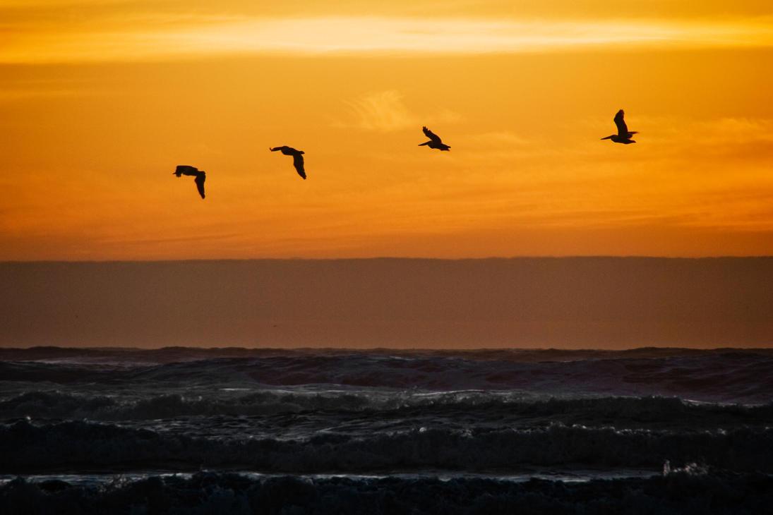 Sunset Flight by BWilliamWest