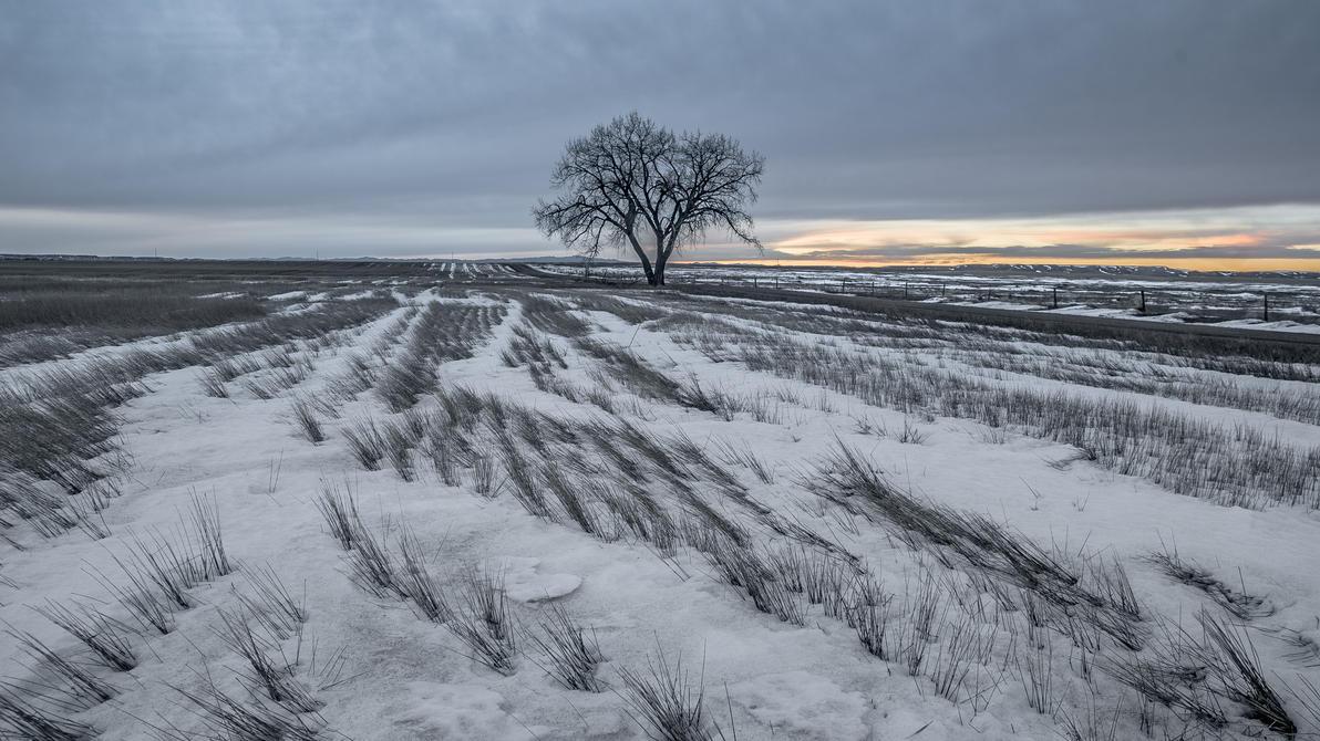 Frozen Slumber by BWilliamWest