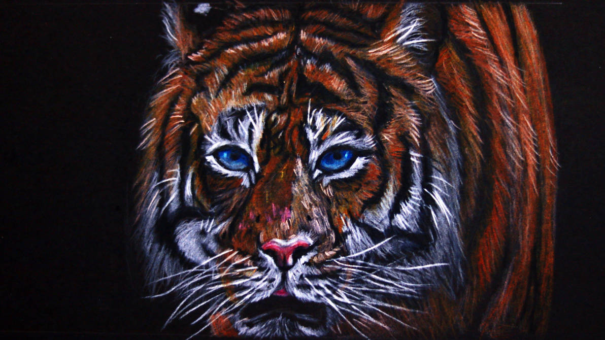 Colored pencil drawing eyes of the tiger by celinehot on deviantart