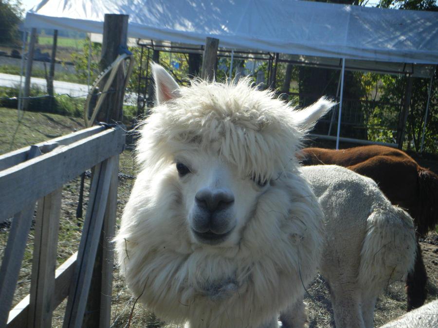 camelliane's Profile Picture