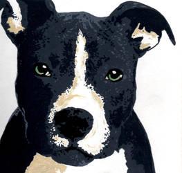 Pitbull by camelliane