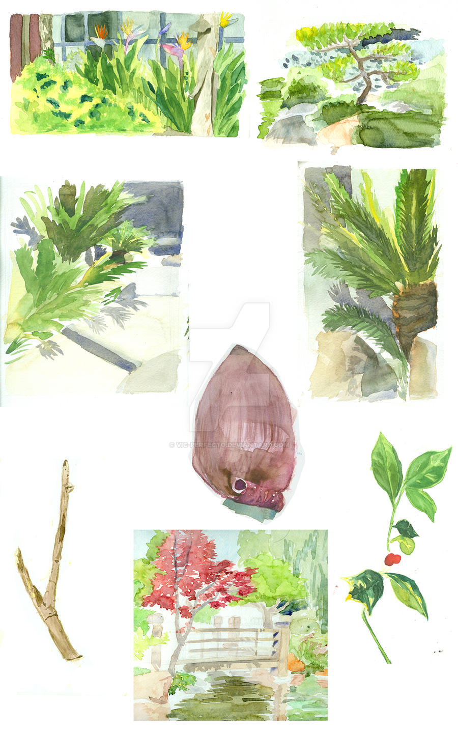 Watercolor Studies by Vic-Perfecto