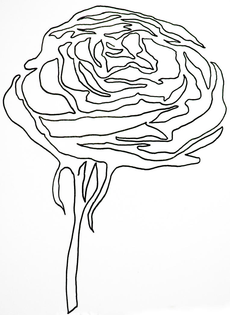 Single Line Art : Single line rose by hummingbbird on deviantart