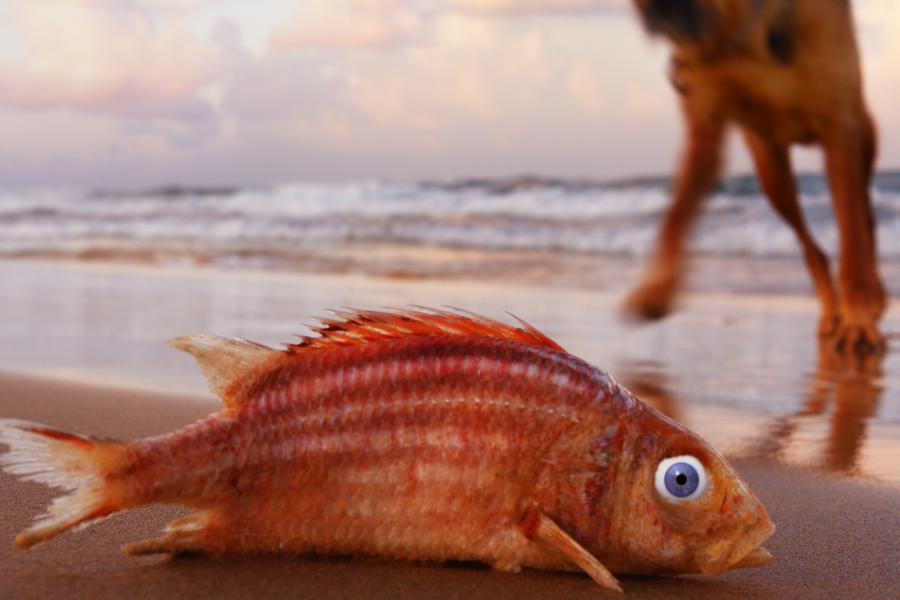 Blue eyed fish by ahermin on deviantart for One eyed fish