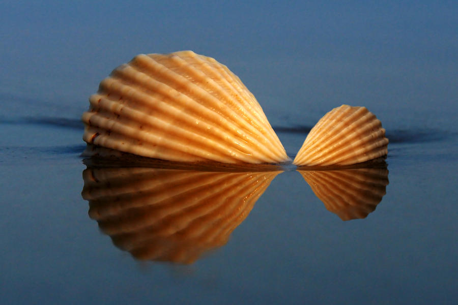 Shellfish by ahermin