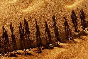 My Desert Caravan by ahermin